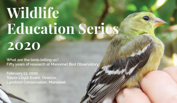 Photo of bird with information about Wildlife Education Series 2020. What are birds telling us? Fifty years of research at Manomet Bird Observatory.